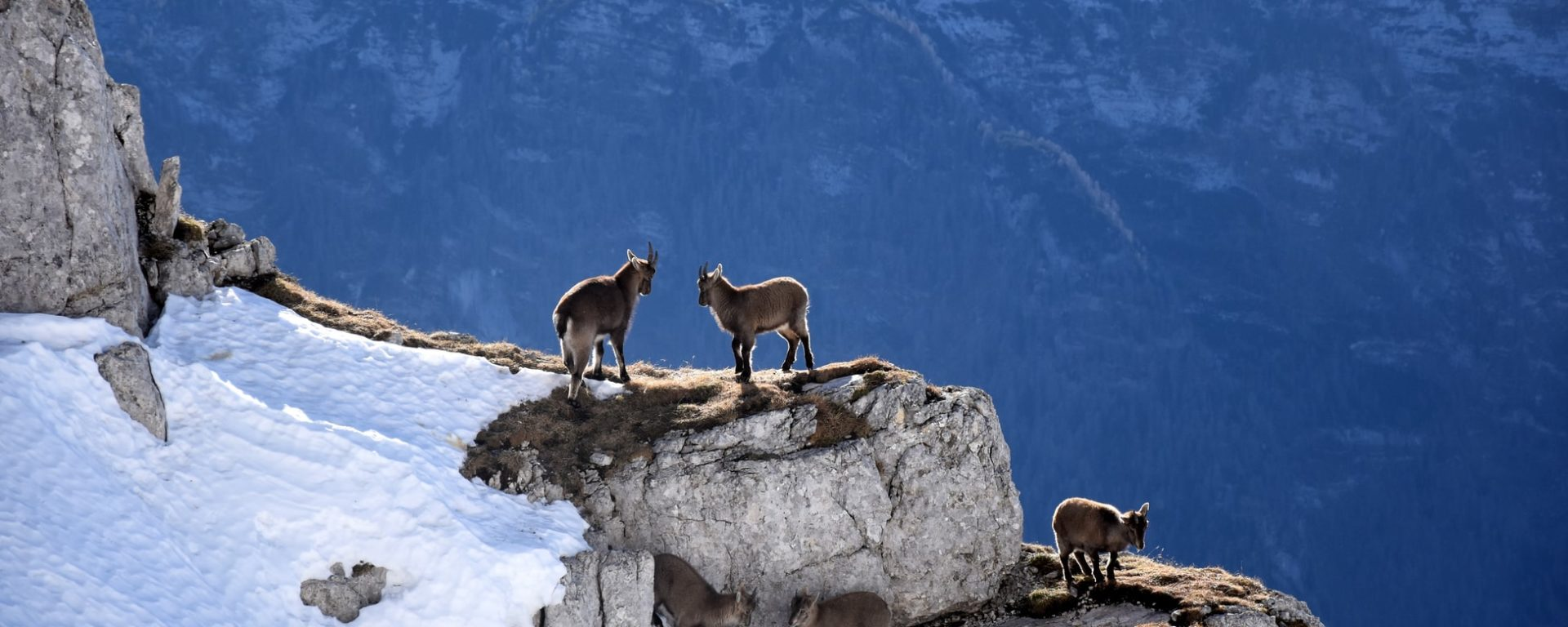 Be a Mountain Goat For God